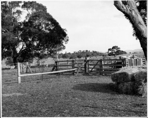Stock yards built on Red Hill to enclose sheep being grazed on Red Hill