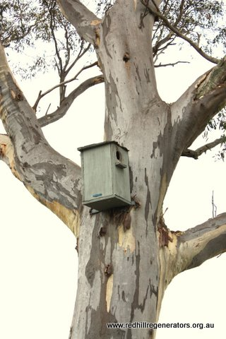 Nest box on Red Hill